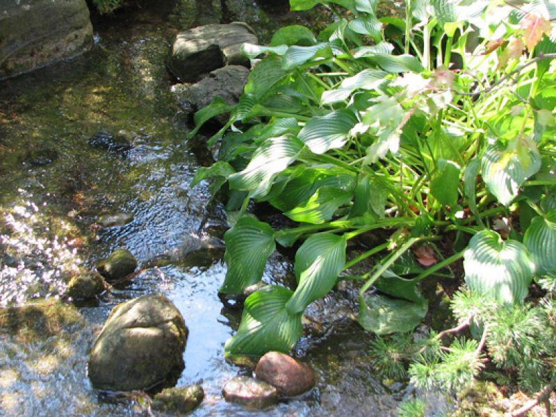 Design bassin jardin japonais saint paul 13 les jardins japonais bassin jardin zen - Faire un petit jardin zen saint paul ...