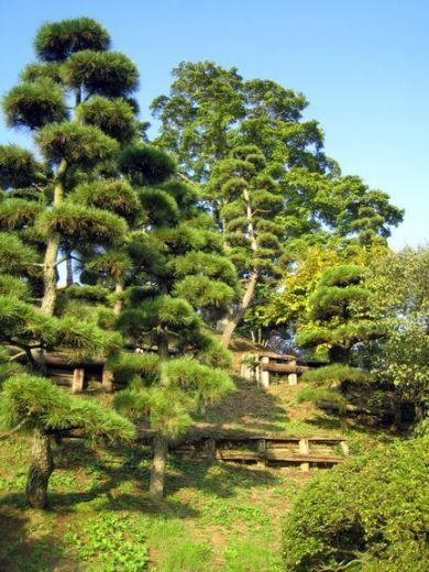 Deco bassin aquatique japonais clermont ferrand 36 clermont ferrand foot entraineur - Massif jardin japonais clermont ferrand ...