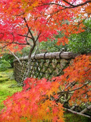 Jardins japonais de kyoto jardin de koetsu ji for Jardin kyoto